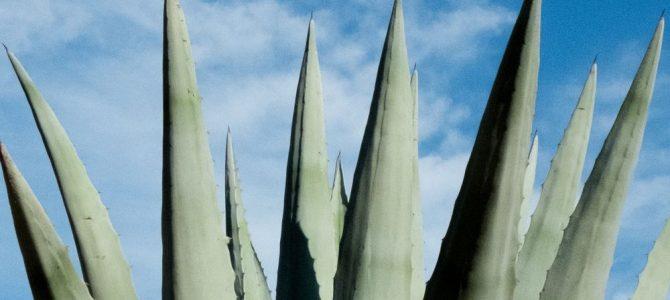 Aloe Vera Spray – en perle fra naturens eget medicinskab