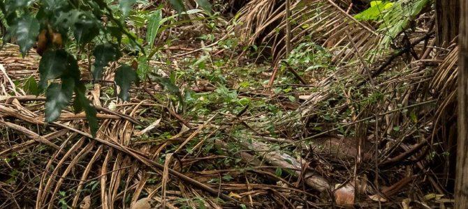 Hvordan kan du være med til at redde regnskoven?